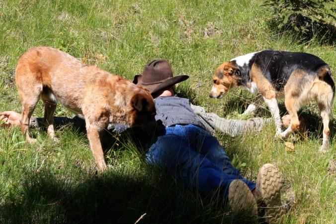 Making Hay 2010 270